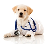 Picture for category Veterinary